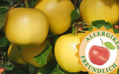 Bio-Apfel Sonnenglanz