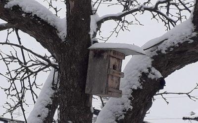 winter wonderland im Bio-Obstgarten