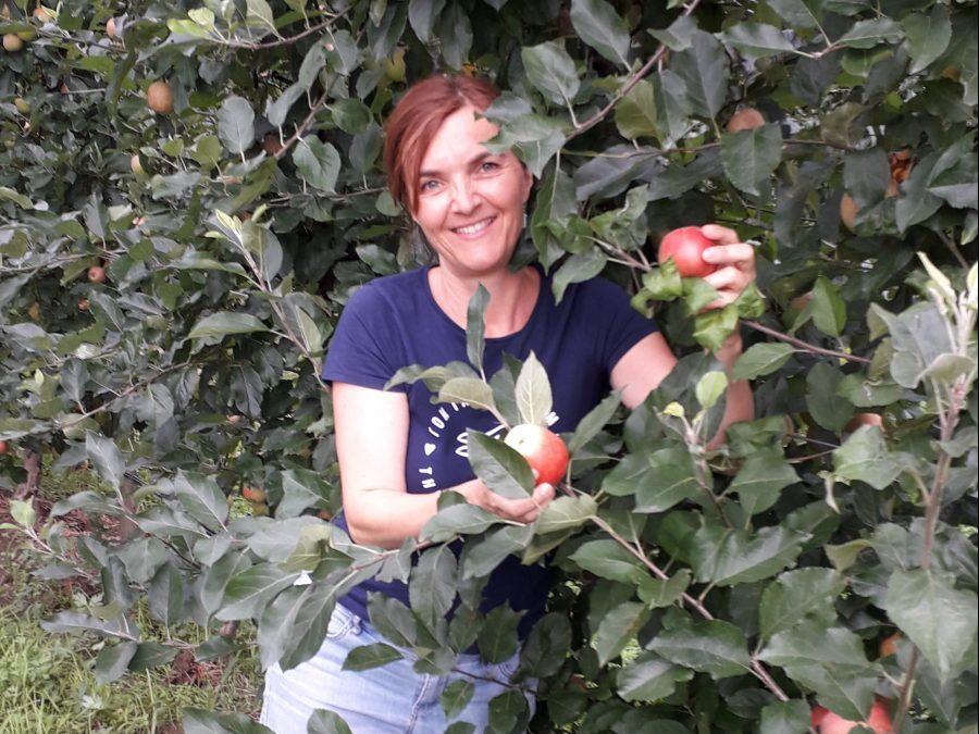 Frische heurige Bio-Äpfel!
